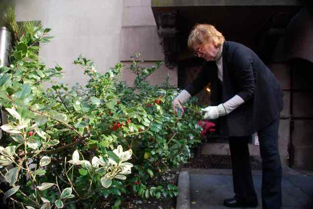 Elizabeth Spencer taking advantage of a warm day to prune the Salmagundi Club garden.
